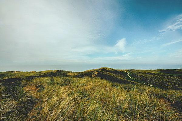 Long grasses on coast