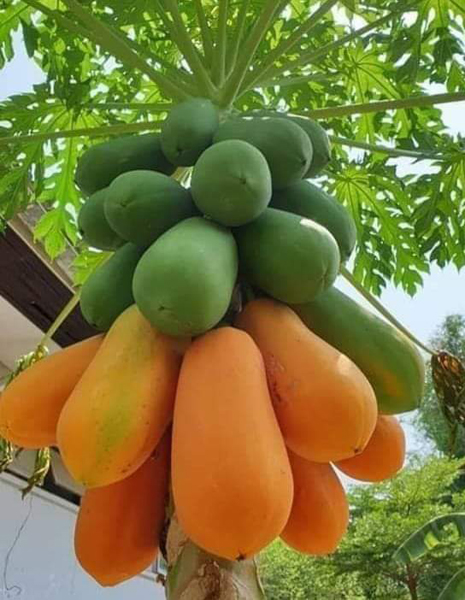 Green and orange tropical fruits