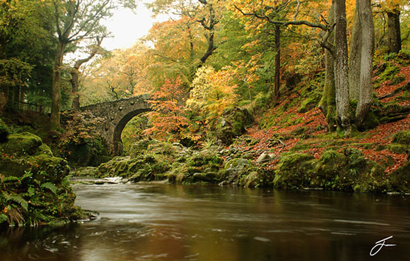 A river running under a stone bridge and through a forest