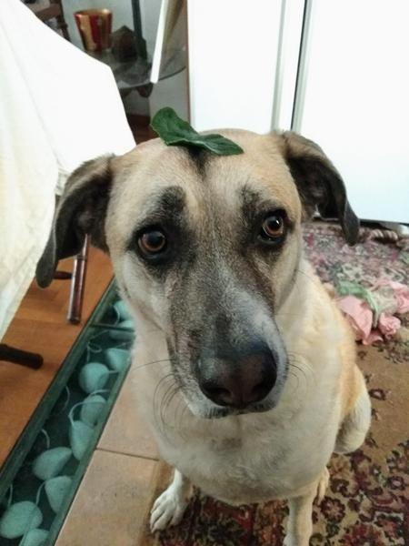 A dog with a leaf on its head