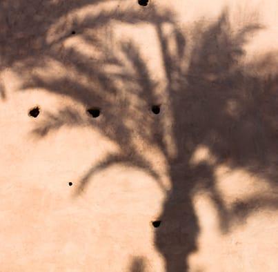 Palm tree shadow on wall