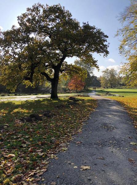 Autumn leaves on path