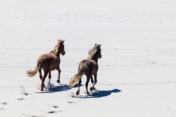 Horses running on beach